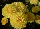 Бал хризантем._3