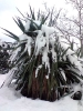 Снегопад в Крыму_10