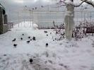 Снегопад в Крыму_2