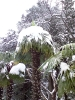 Снегопад в Крыму_7