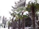 Снегопад в Крыму_9