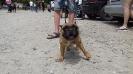 Выставка собак в Гурзуфе._10