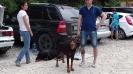 Выставка собак в Гурзуфе._1