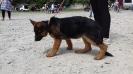 Выставка собак в Гурзуфе._2