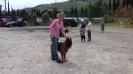 Выставка собак в Гурзуфе._4