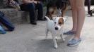 Выставка собак в Гурзуфе._7