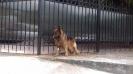 Выставка собак в Гурзуфе._9